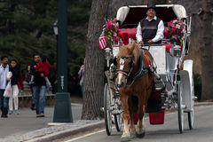 Horse-Drawn Carriage in Central Park Stock Image