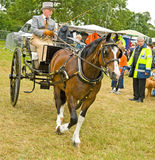 Horse drawn carriage driver. Royalty Free Stock Images