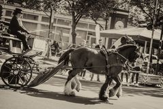 Horse- drawn carriage stock image