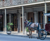 Horse-drawn carriage-New Orleans French Quarter royalty free stock photography