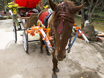 Horse drawn carriage. Horse-drawn carriage in the Park Prenn Vietnam, January 2017 Royalty Free Stock Photo