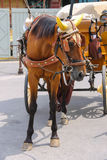 Horse-drawn carriage on Piazza del Duomo in Pisa Royalty Free Stock Images