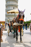 Horse-drawn carriage on Piazza del Duomo in Pisa, Italy Stock Photos