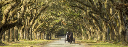 Horse drawn carriage on plantation. Horse drawn carriage driving down row of oaks on Southern plantation Royalty Free Stock Image