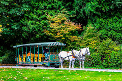 Horse Drawn Carriage in Stanley Park, Vancouver, BC. Stock Photo