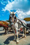Horse drawn carriage in the streets of Jogjakarta Royalty Free Stock Photos