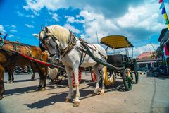 Horse drawn carriage in the streets of Jogjakarta Royalty Free Stock Images