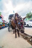 Horse drawn carriage in the streets of Jogjakarta Stock Photo