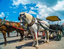 Horse drawn carriage in the streets of Jogjakarta Stock Photos