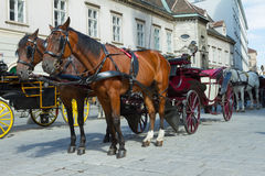 Horse-drawn Carriage in Vienna Stock Image