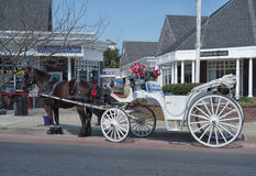 Horse-drawn carriage. White horse-drawn carriage on the street of Cape May NJ Stock Image