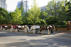 Horse drawn carriages Royalty Free Stock Photo