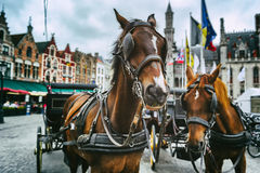 Horse-drawn carriages in Bruges, Belgium Stock Photography