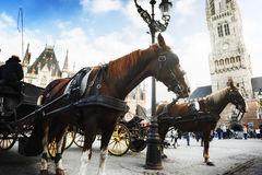 Horse-drawn carriages in Bruges, Belgium Royalty Free Stock Photo