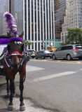 Horse-Drawn Carriages, Horse Wearing Blinkers and Plume Feather, Midtown, Manhattan, NYC, NY, USA royalty free stock images