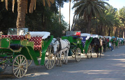 Horse Drawn Carriages in Morocco stock photos