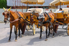 Horse-drawn carriages on Piazza del Duomo in Pisa, Italy Royalty Free Stock Photo