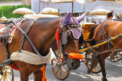 Horse-drawn carriages on Piazza del Duomo in Pisa, Italy Royalty Free Stock Images