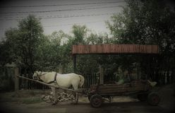 A horse-drawn cart in an old style at a bus stop in a village in Romania stock photography