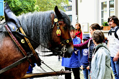Horse drawn and pedestrians Royalty Free Stock Photos