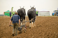 Horse drawn ploughing championship Royalty Free Stock Photography