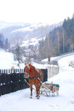 Horse drawn sled. In Bran county, Romania Stock Photography