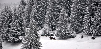 Horse drawn sledge on snow. With a forest in background Stock Photo