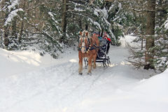 Horse drawn sleigh Royalty Free Stock Photography
