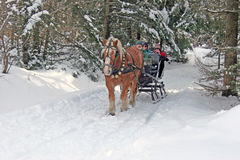 Horse drawn sleigh Royalty Free Stock Photos