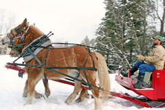 Horse drawn sleigh Stock Photography