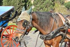 Horse drawn taxi Royalty Free Stock Photo