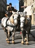 Horse drawn taxi in Florence, Italy Stock Image