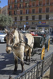 Horse drawn taxi in Valencia old city, Spain Stock Photo