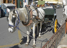 Horse drawn taxi in Valencia old city, Spain Stock Image