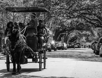 Horse drawn tour in Charleston, SC. Stock Image