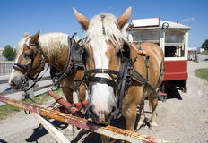 Horse drawn trolley Stock Photo