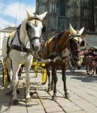 Horse-drawn vagn i Wien Arkivfoton