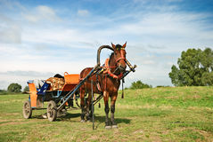 Horse-drawn vehicle Stock Image