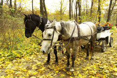Horse-drawn vehicle. In autumn forest Royalty Free Stock Photos