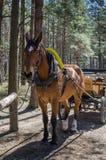 Horse-drawn vervoer Stock Fotografie
