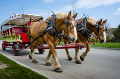 Horse-drawn vintage carriage provides transportation for guests of the Grand Hotel Royalty Free Stock Photos