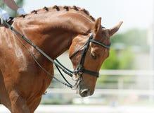 Horse dressage Stock Photo