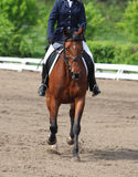 Horse dressage competition Stock Photo