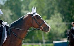 Horse on dressage Stock Image