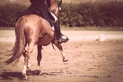 Horse on the dressage field in the trot. Dressage horse on dressage course in tournament with rider step leg stretched forward Stock Image