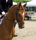 Horse dressage show Stock Image