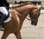 Horse dressage show Royalty Free Stock Photography