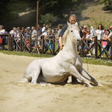 Horse Dressage Show royalty free stock images