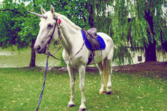 Horse dressed as a unicorn with the horn. Ideas for photoshoot. Wedding. Party. Outdoor Royalty Free Stock Photography