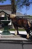 Horse Drink. Clydesdale Horse drinking in fountain stock image